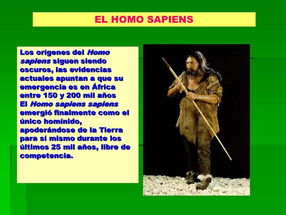 Los orígenes del Homo sapiens siguen siendo oscuros, las evidencias actuales apuntan a que su emergencia es en África entre 150 y 200 mil años El Homo