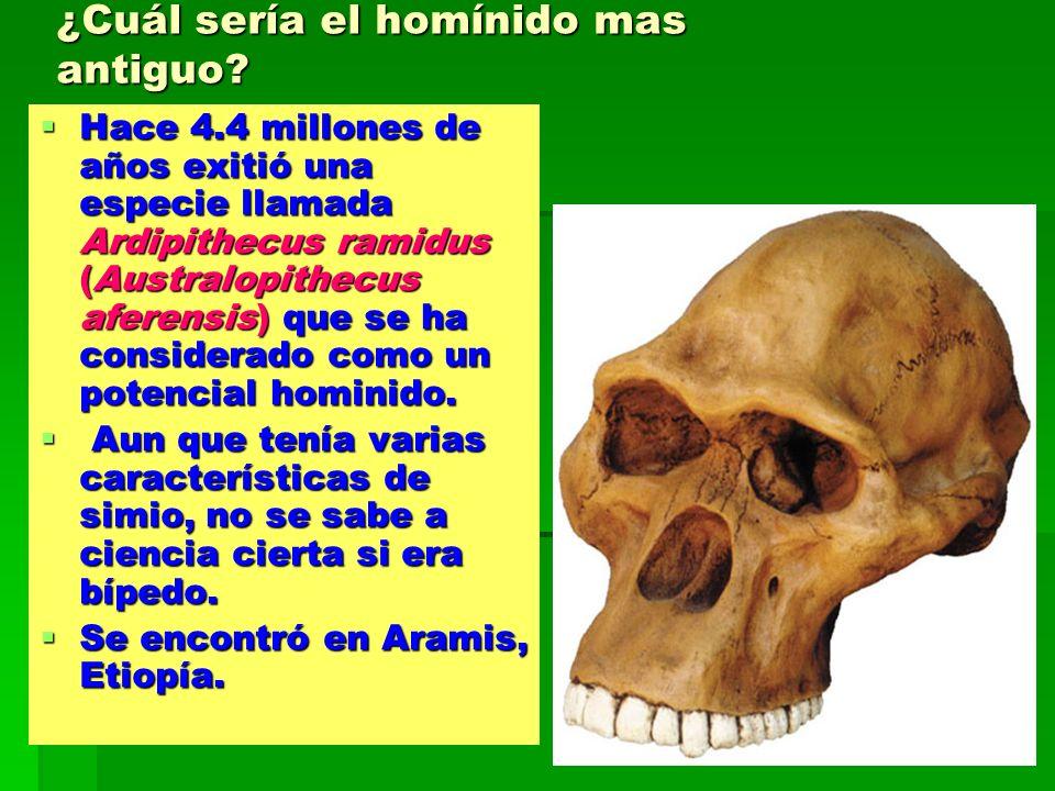 ¿Cuál sería el homínido mas antiguo? Hace 4.4 millones de años exitió una especie llamada Ardipithecus ramidus (Australopithecus aferensis) que se ha