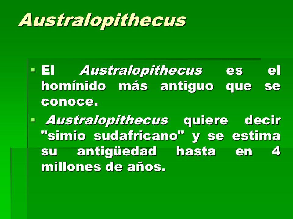 Australopithecus El Australopithecus es el homínido más antiguo que se conoce. El Australopithecus es el homínido más antiguo que se conoce. Australop
