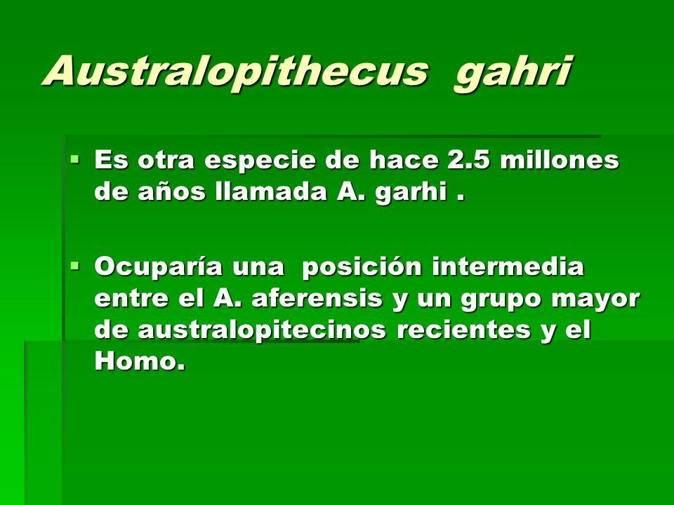 Australopithecus gahri Es otra especie de hace 2.5 millones de años llamada A. garhi. Es otra especie de hace 2.5 millones de años llamada A. garhi. O