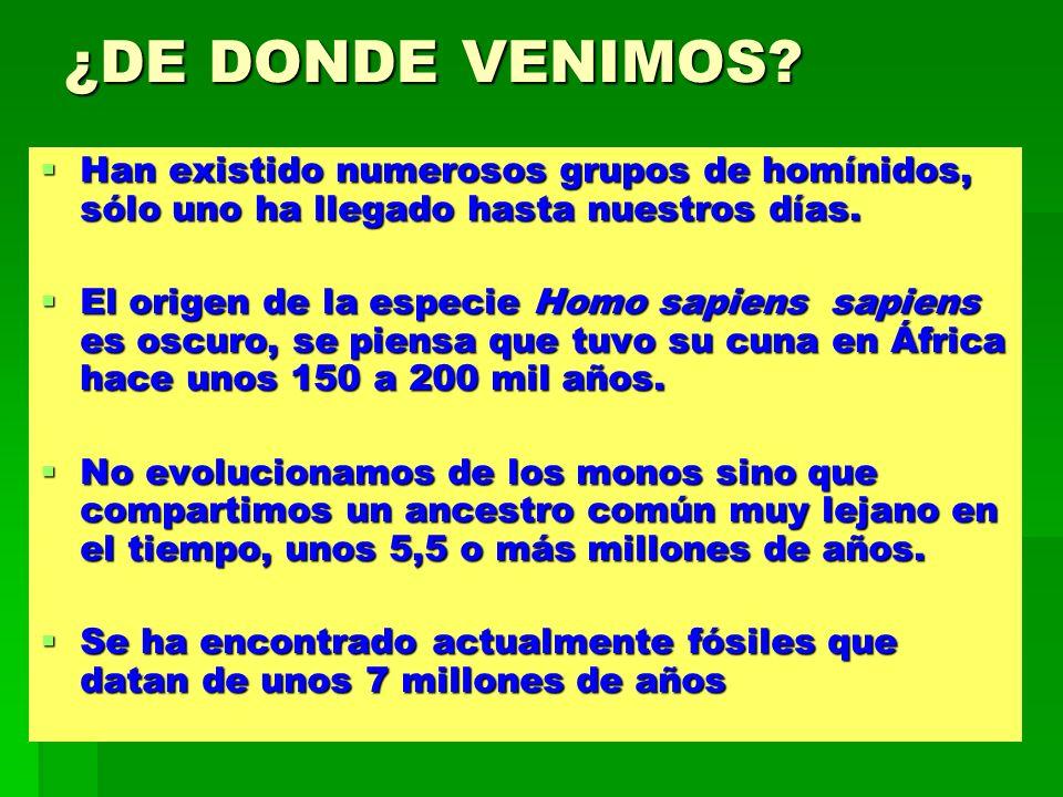 EL GÉNERO HOMO El género Homo, apareció hace 2.5 millones de años e incluye por lo menos tres especies: Homo habilis, Homo erectus y Homo sapiens.