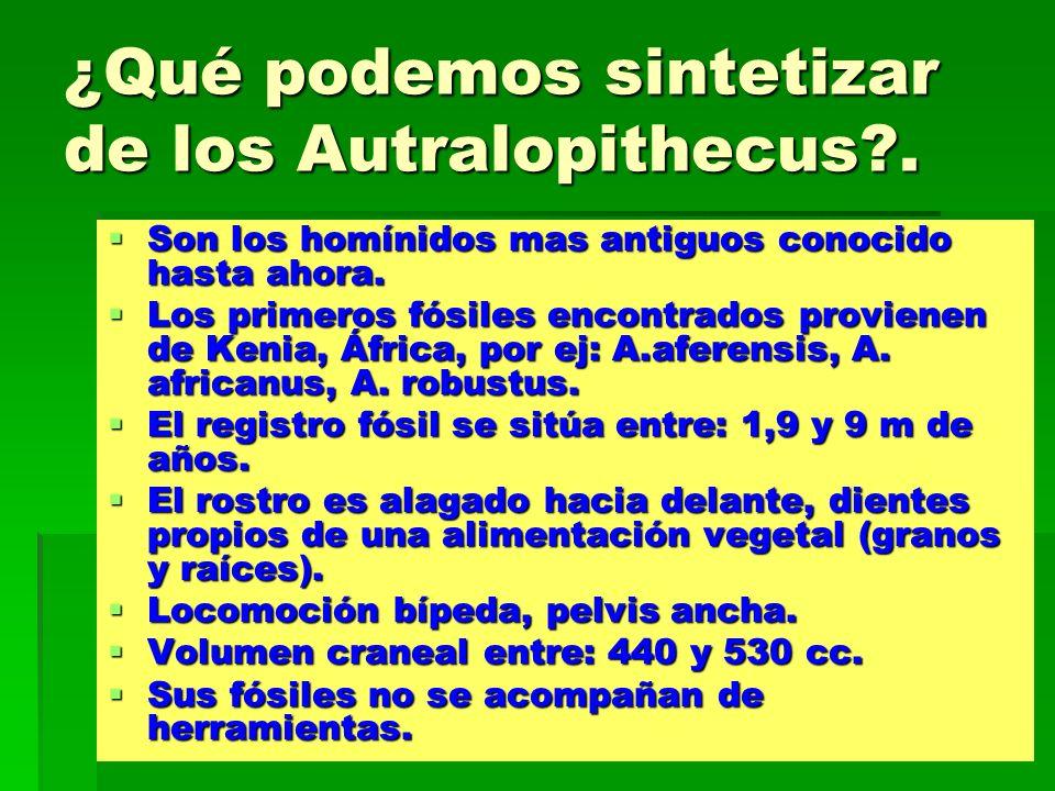 ¿Qué podemos sintetizar de los Autralopithecus?. Son los homínidos mas antiguos conocido hasta ahora. Son los homínidos mas antiguos conocido hasta ah