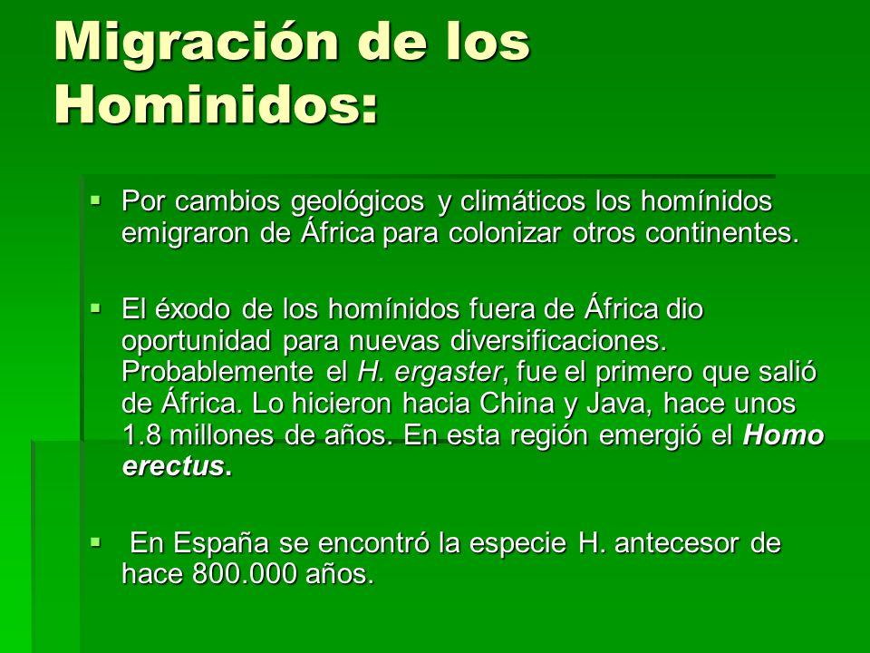 Migración de los Hominidos: Por cambios geológicos y climáticos los homínidos emigraron de África para colonizar otros continentes. Por cambios geológ