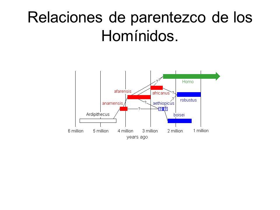 Relaciones de parentezco de los Homínidos.