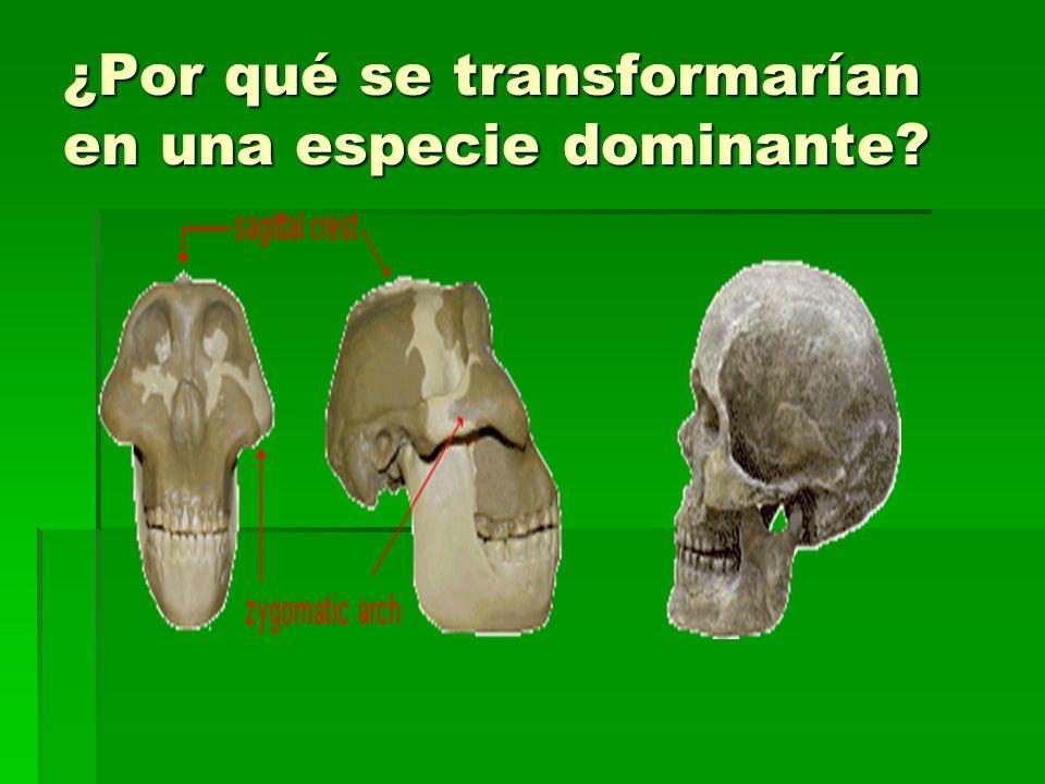 ¿Por qué se transformarían en una especie dominante?