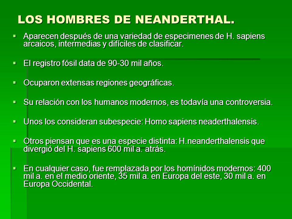 LOS HOMBRES DE NEANDERTHAL. Aparecen después de una variedad de especimenes de H. sapiens arcaicos, intermedias y difíciles de clasificar. Aparecen de
