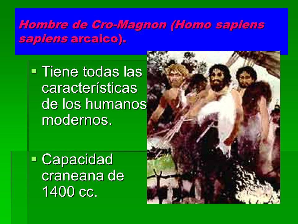 Hombre de Cro-Magnon (Homo sapiens sapiens arcaico). Tiene todas las características de los humanos modernos. Tiene todas las características de los h