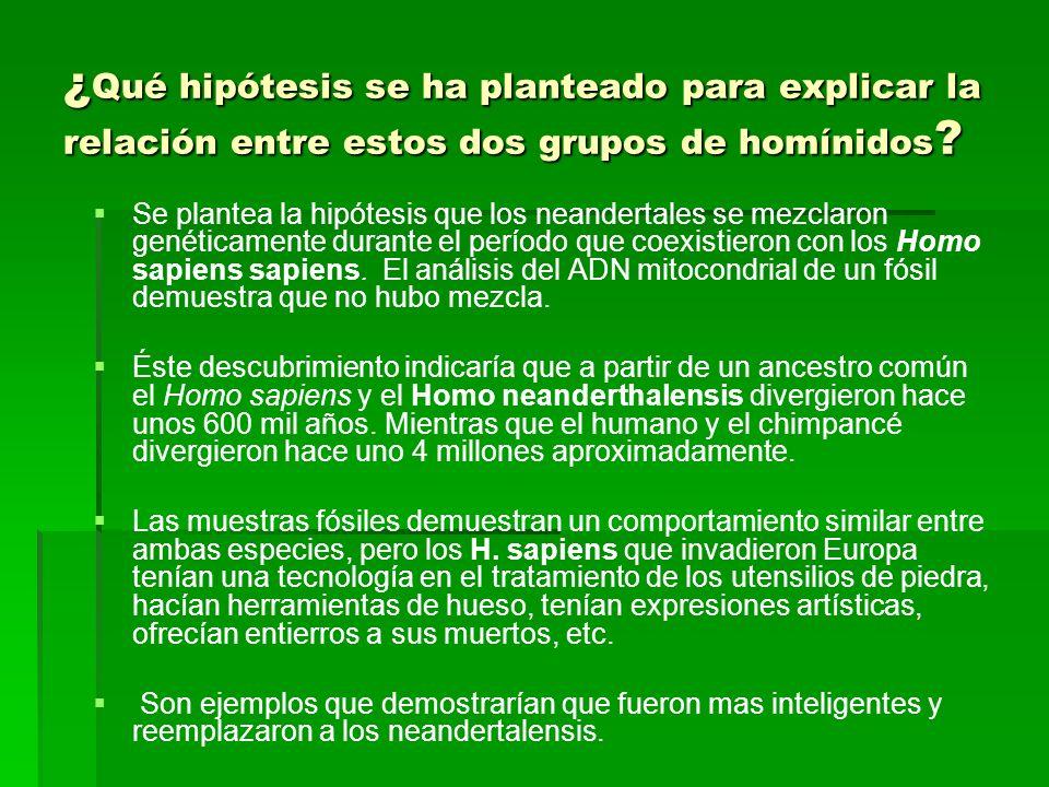 ¿ Qué hipótesis se ha planteado para explicar la relación entre estos dos grupos de homínidos ? Se plantea la hipótesis que los neandertales se mezcla