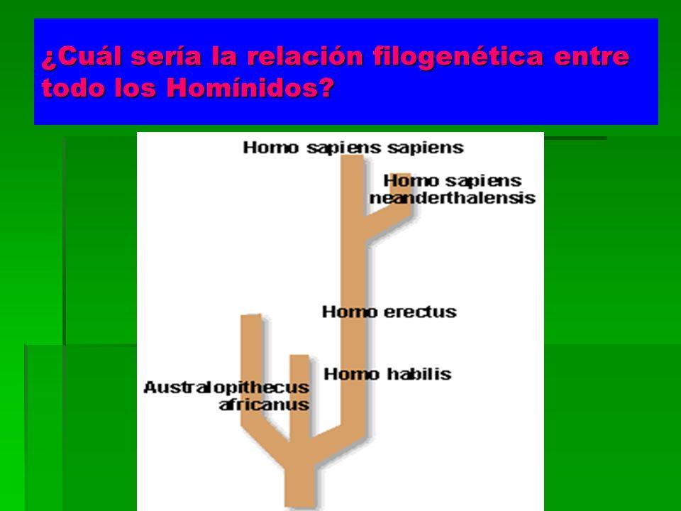 ¿Cuál sería la relación filogenética entre todo los Homínidos?