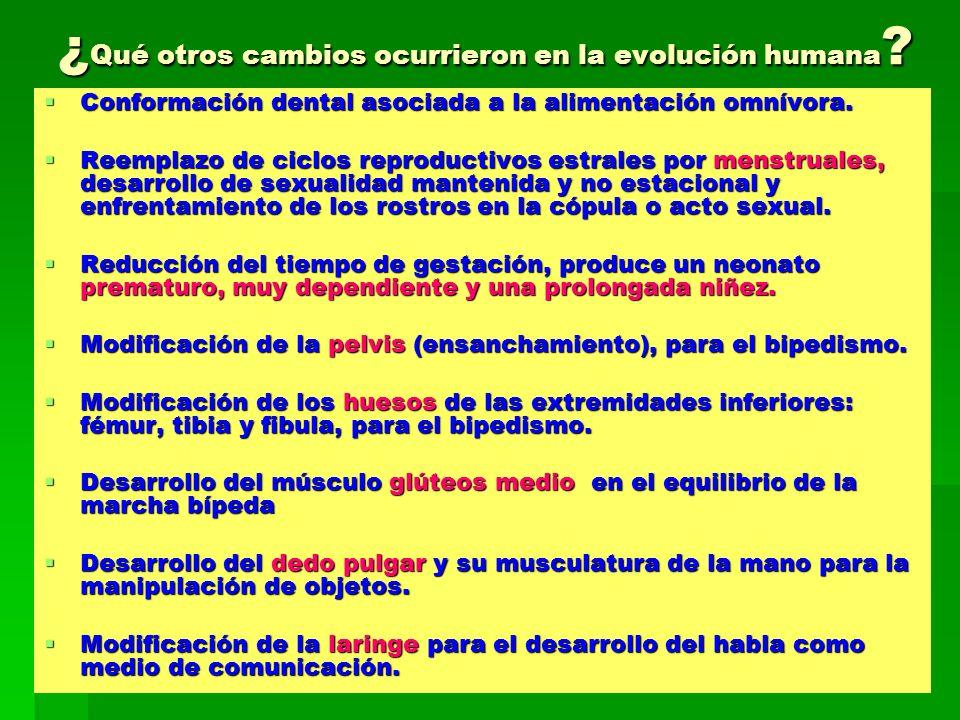 ¿ Qué otros cambios ocurrieron en la evolución humana ? Conformación dental asociada a la alimentación omnívora. Conformación dental asociada a la ali