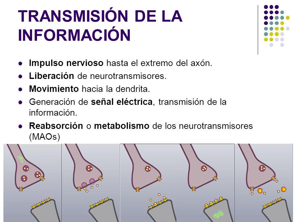 TRANSMISIÓN DE LA INFORMACIÓN Impulso nervioso hasta el extremo del axón. Liberación de neurotransmisores. Movimiento hacia la dendrita. Generación de