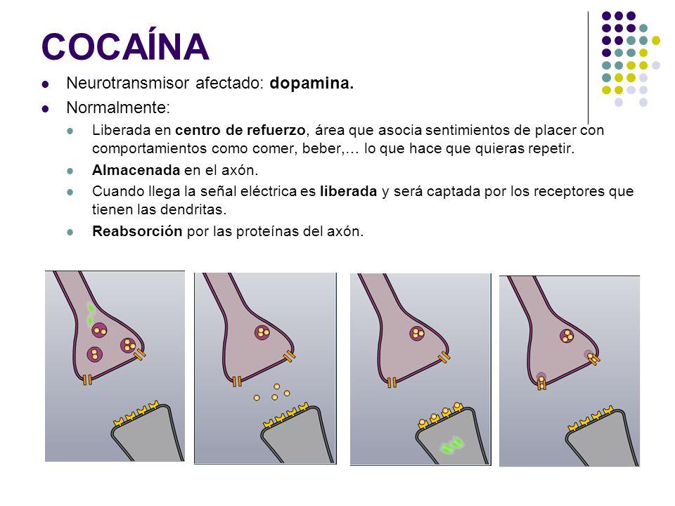 COCAÍNA Neurotransmisor afectado: dopamina. Normalmente: Liberada en centro de refuerzo, área que asocia sentimientos de placer con comportamientos co
