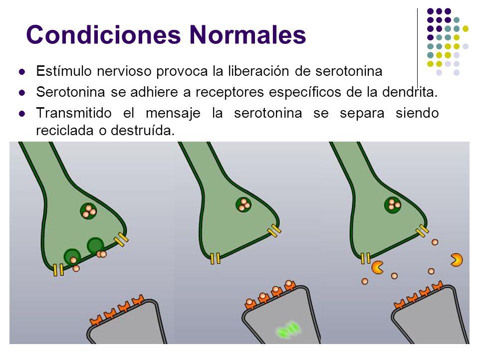 Condiciones Normales Estímulo nervioso provoca la liberación de serotonina Serotonina se adhiere a receptores específicos de la dendrita. Transmitido