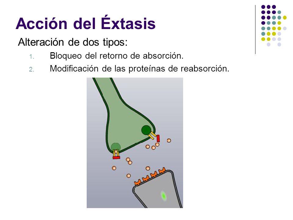 Acción del Éxtasis Alteración de dos tipos: 1. Bloqueo del retorno de absorción. 2. Modificación de las proteínas de reabsorción.
