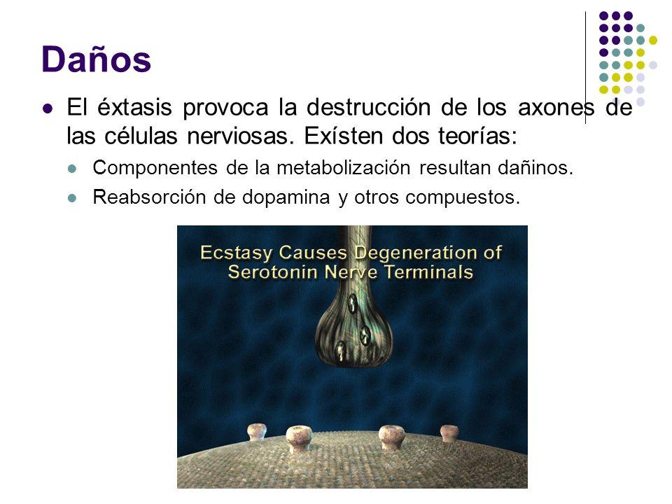 Daños El éxtasis provoca la destrucción de los axones de las células nerviosas. Exísten dos teorías: Componentes de la metabolización resultan dañinos