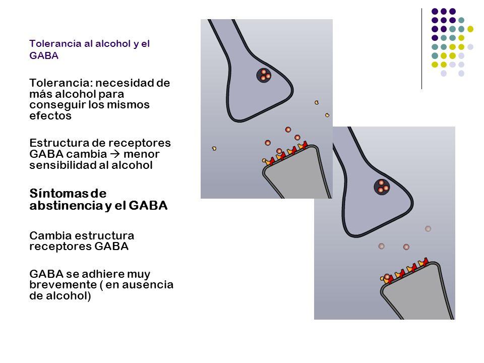 Tolerancia al alcohol y el GABA Tolerancia: necesidad de más alcohol para conseguir los mismos efectos Estructura de receptores GABA cambia menor sens