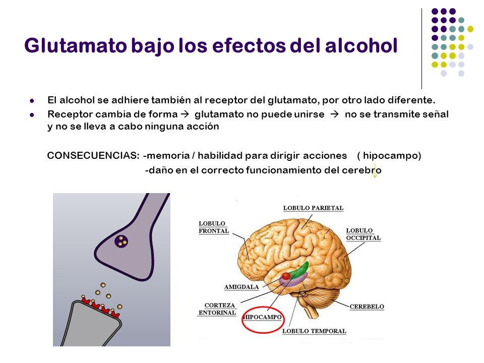 Glutamato bajo los efectos del alcohol El alcohol se adhiere también al receptor del glutamato, por otro lado diferente. Receptor cambia de forma glut