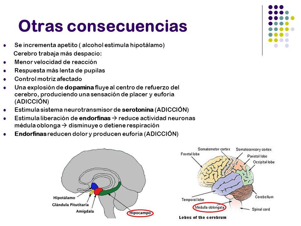 Otras consecuencias Se incrementa apetito ( alcohol estimula hipotálamo) Cerebro trabaja más despacio: Menor velocidad de reacción Respuesta más lenta