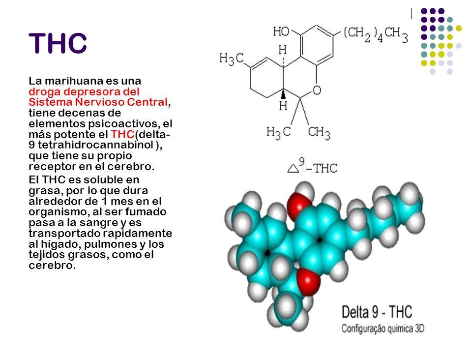 THC La marihuana es una droga depresora del Sistema Nervioso Central, tiene decenas de elementos psicoactivos, el más potente el THC(delta- 9 tetrahid