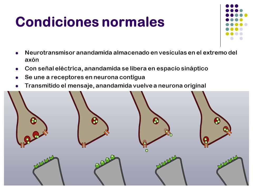 Condiciones normales Neurotransmisor anandamida almacenado en vesículas en el extremo del axón Con señal eléctrica, anandamida se libera en espacio si