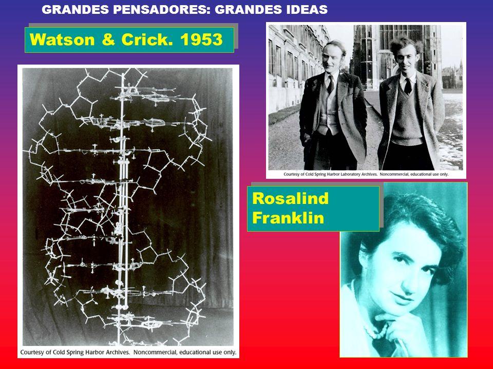 Watson & Crick. 1953 Rosalind Franklin GRANDES PENSADORES: GRANDES IDEAS