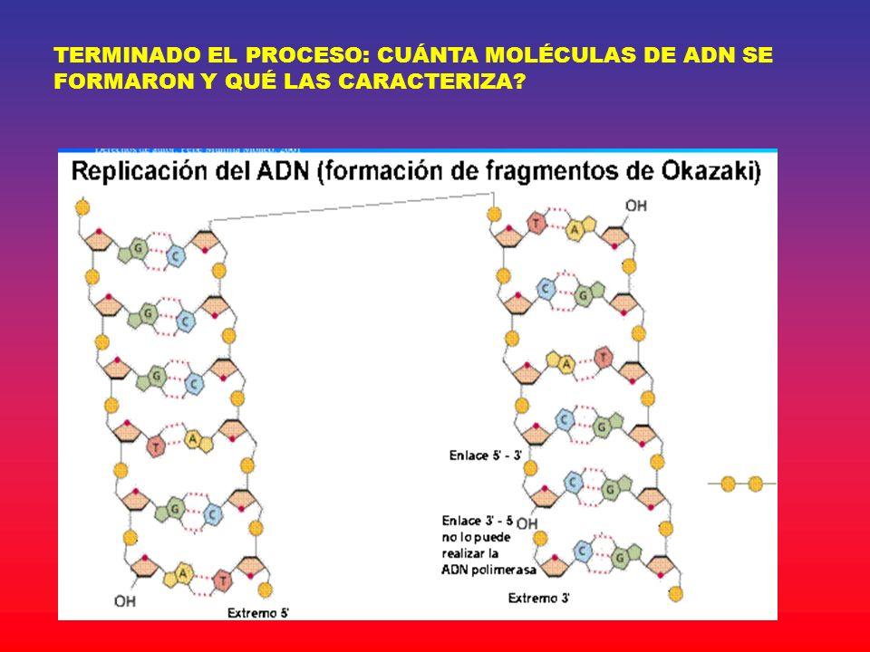 TERMINADO EL PROCESO: CUÁNTA MOLÉCULAS DE ADN SE FORMARON Y QUÉ LAS CARACTERIZA?