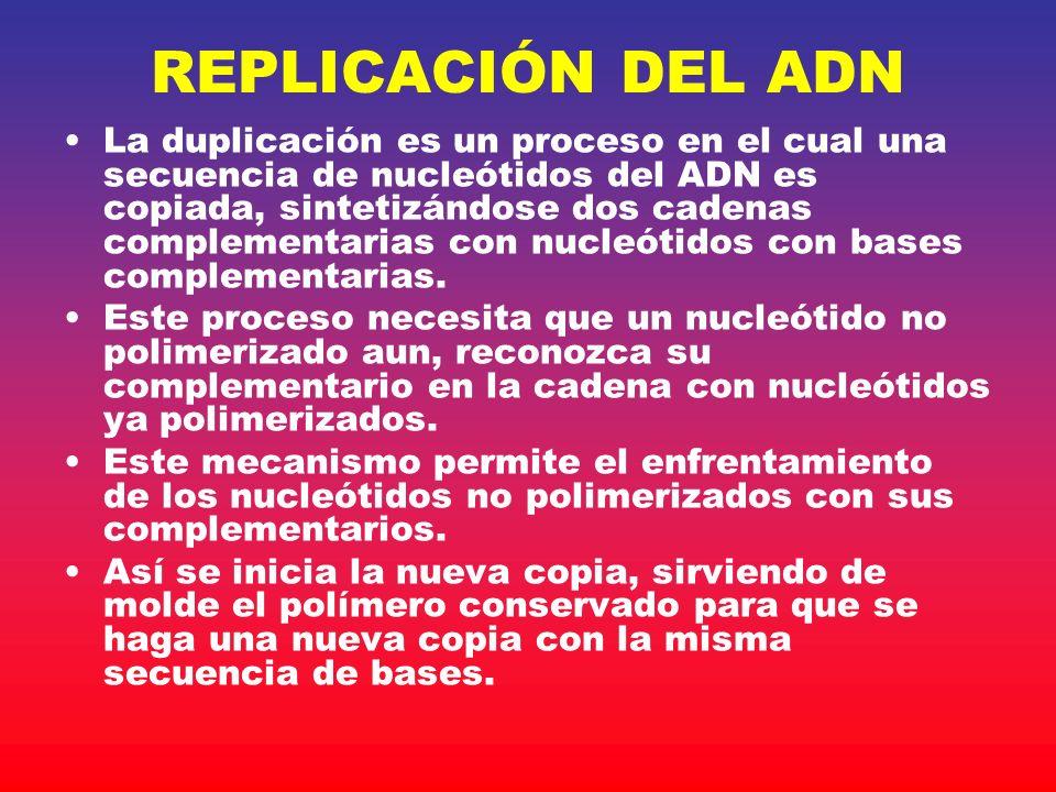 REPLICACIÓN DEL ADN La duplicación es un proceso en el cual una secuencia de nucleótidos del ADN es copiada, sintetizándose dos cadenas complementaria