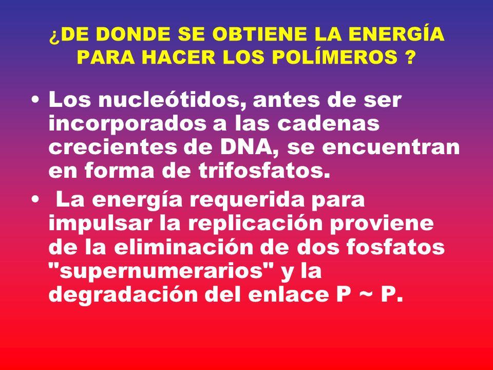 ¿ DE DONDE SE OBTIENE LA ENERGÍA PARA HACER LOS POLÍMEROS ? Los nucleótidos, antes de ser incorporados a las cadenas crecientes de DNA, se encuentran