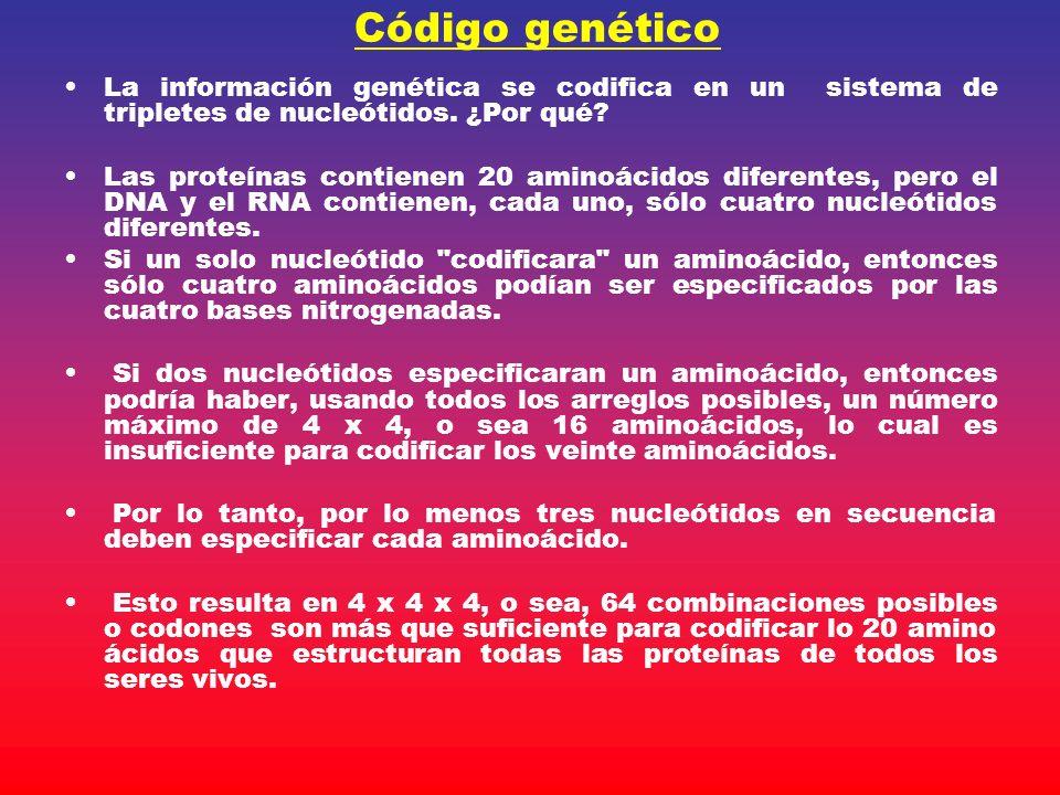 Código genético La información genética se codifica en un sistema de tripletes de nucleótidos. ¿Por qué? Las proteínas contienen 20 aminoácidos difere