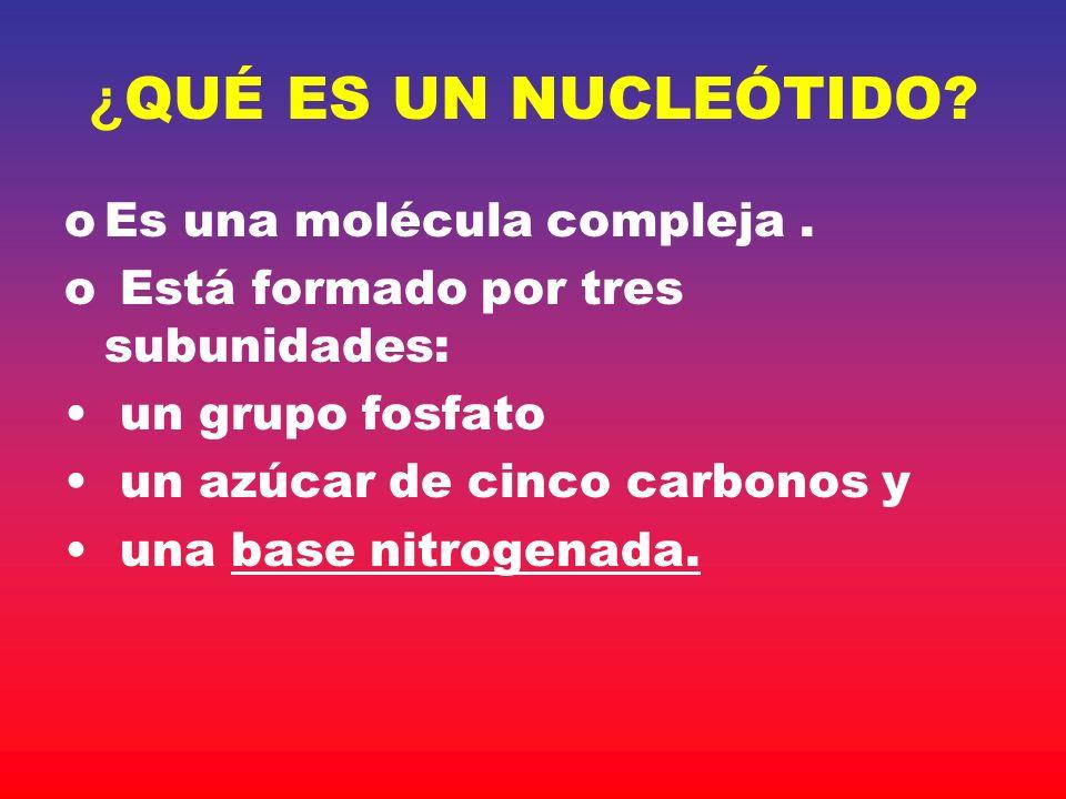 Código genético La información genética se codifica en un sistema de tripletes de nucleótidos.