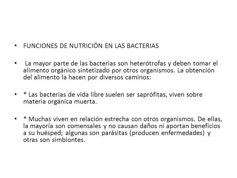 FUNCIONES DE NUTRICIÓN EN LAS BACTERIAS La mayor parte de las bacterias son heterótrofas y deben tomar el alimento orgánico sintetizado por otros orga