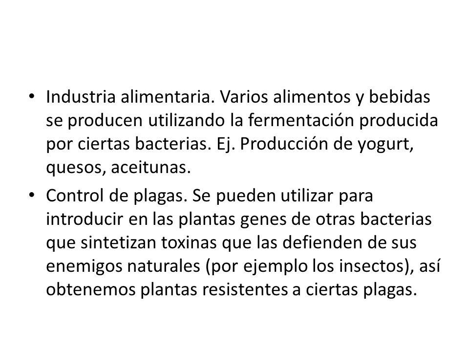 Industria alimentaria. Varios alimentos y bebidas se producen utilizando la fermentación producida por ciertas bacterias. Ej. Producción de yogurt, qu