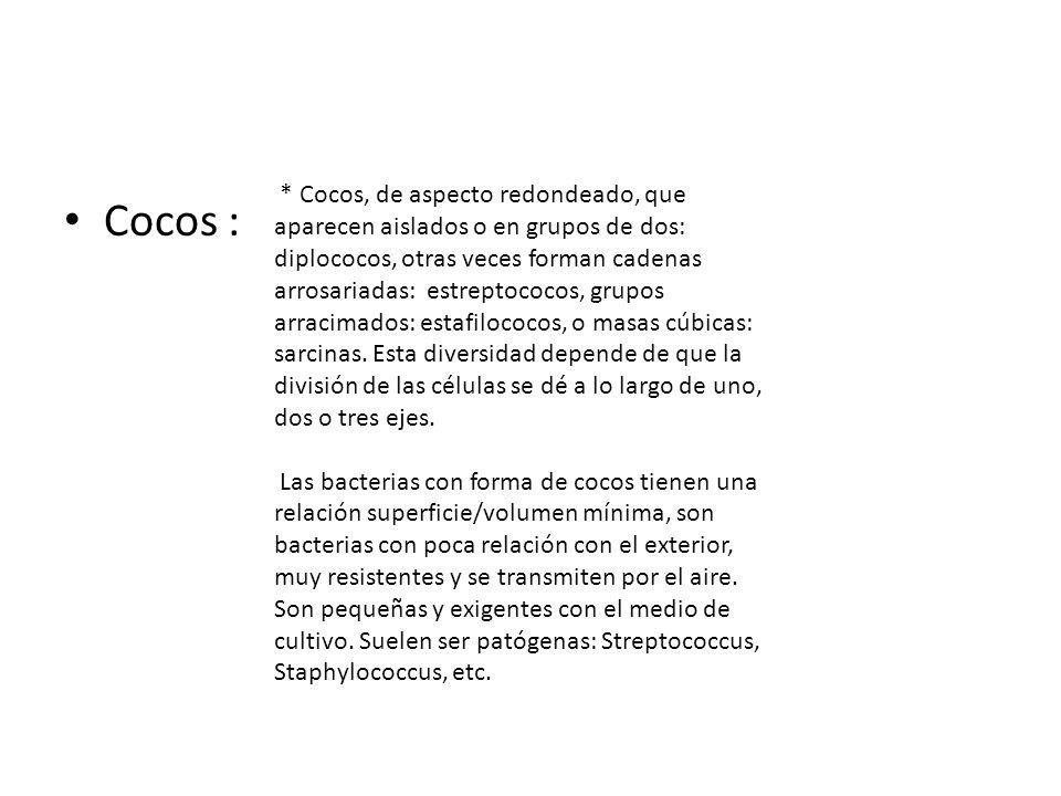 Cocos : * Cocos, de aspecto redondeado, que aparecen aislados o en grupos de dos: diplococos, otras veces forman cadenas arrosariadas: estreptococos,