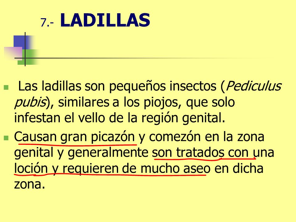 7.- LADILLAS Las ladillas son pequeños insectos (Pediculus pubis), similares a los piojos, que solo infestan el vello de la región genital. Causan gra