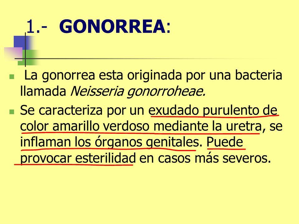 1.- GONORREA: La gonorrea esta originada por una bacteria llamada Neisseria gonorroheae. Se caracteriza por un exudado purulento de color amarillo ver