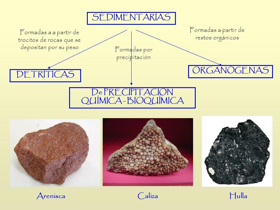 SEDIMENTARIAS Formadas a a partir de trocitos de rocas que se depositan por su peso Formadas por precipitación Formadas a partir de restos orgánicos D