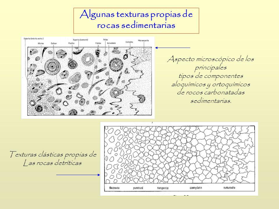 Aspecto microscópico de los principales tipos de componentes aloquímicos y ortoquímicos de rocos carbonatadas sedimentarias. Algunas texturas propias