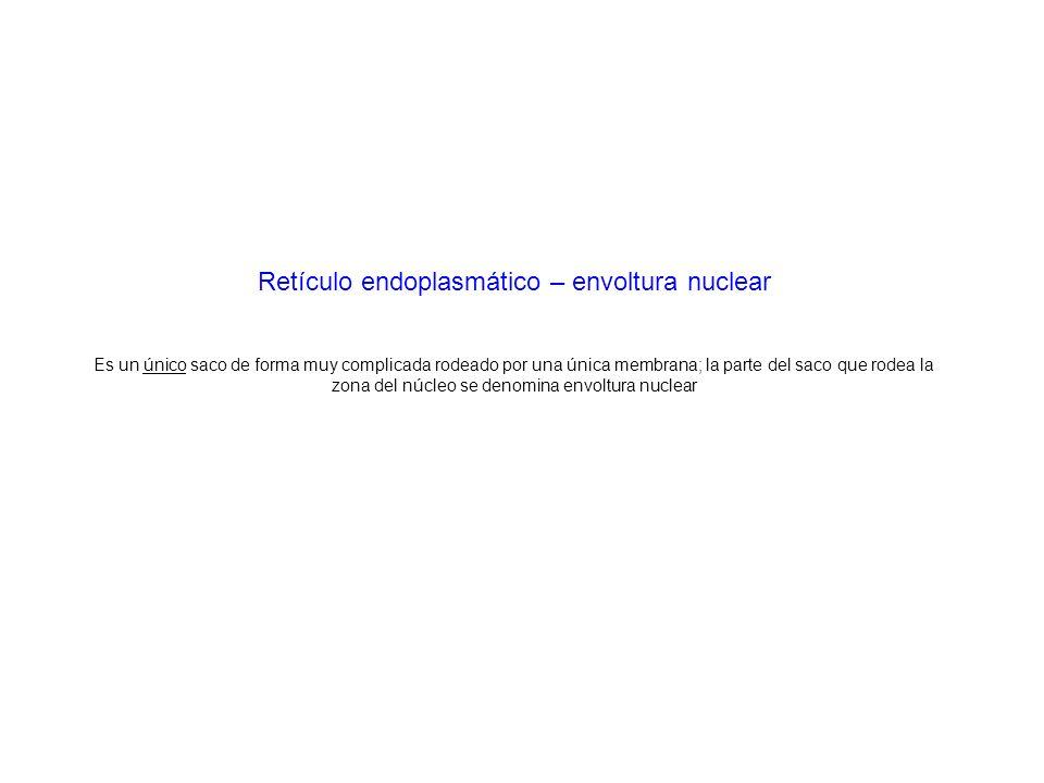 Retículo endoplasmático – envoltura nuclear Es un único saco de forma muy complicada rodeado por una única membrana; la parte del saco que rodea la zona del núcleo se denomina envoltura nuclear