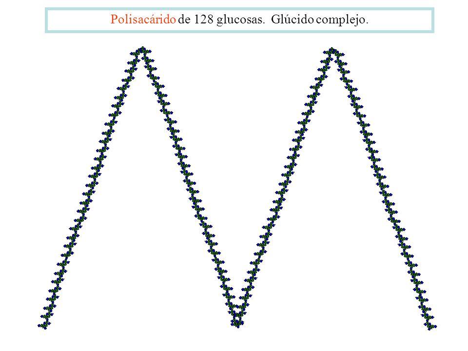 Polisacárido de 128 glucosas. Glúcido complejo.