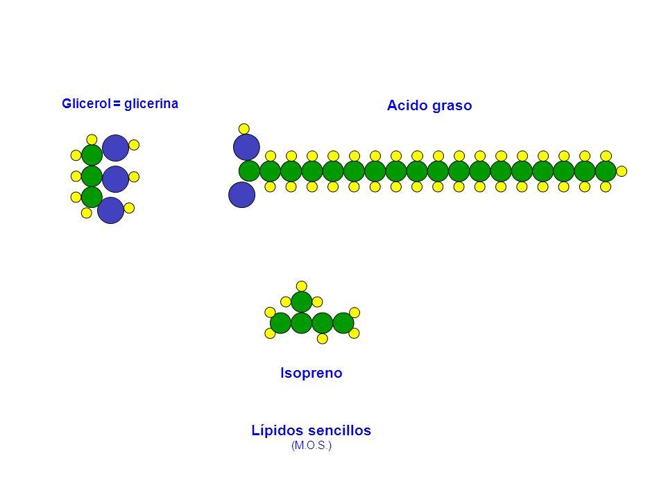 Glicerol = glicerina Acido graso Isopreno Lípidos sencillos (M.O.S.)
