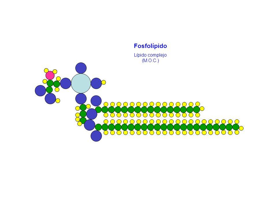 Fosfolípido Lípido complejo (M.O.C.)