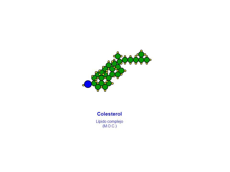 Colesterol Lípido complejo (M.O.C.)