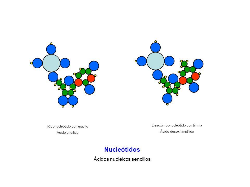 Ribonucleótido con uracilo Ácido uridílico Desoxirribonucleótido con timina Ácido desoxitimidílico Nucleótidos Ácidos nucleicos sencillos