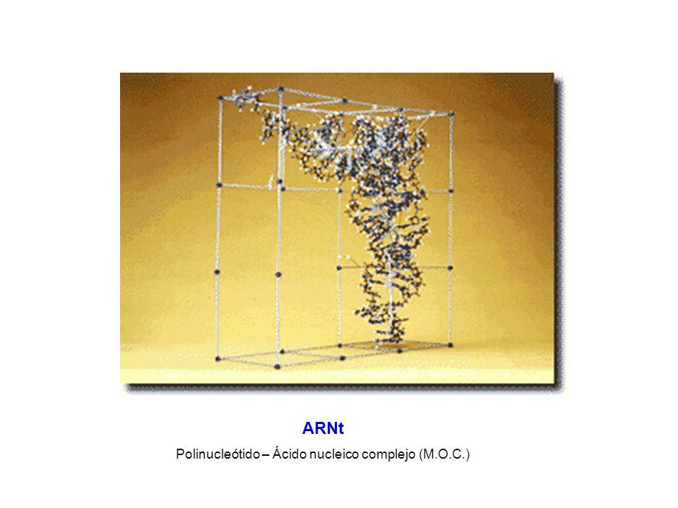 ARNt Polinucleótido – Ácido nucleico complejo (M.O.C.)