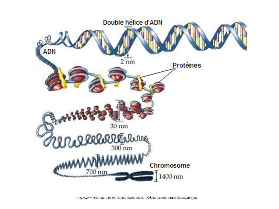 http://www.linternaute.com/science/divers/dossiers/06/revolutions-scientifiques/adn.jpg