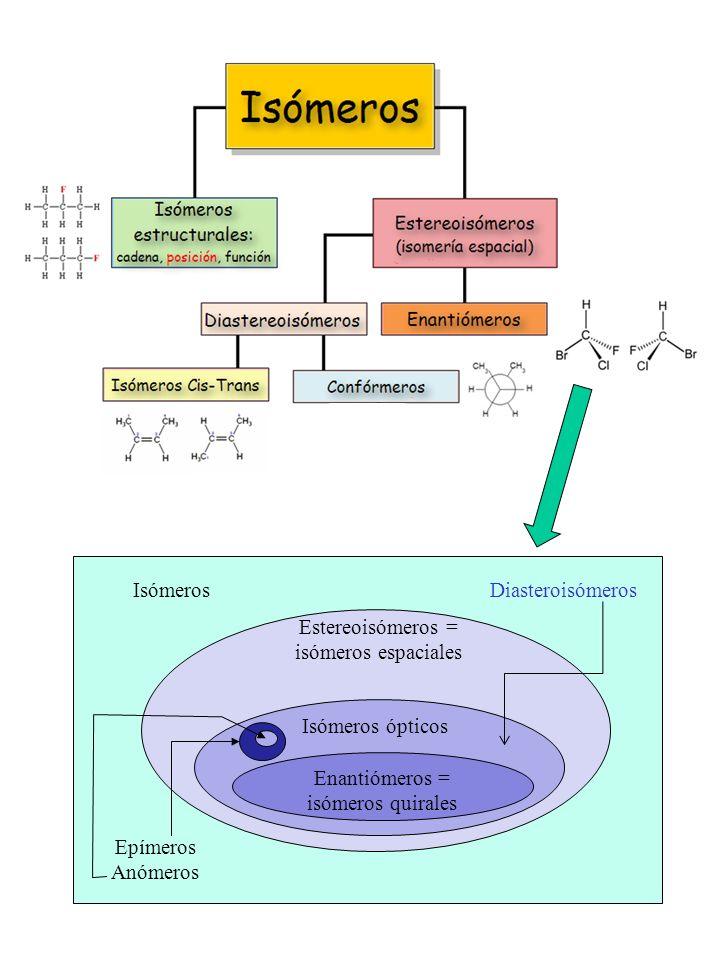 Isomerización espontánea de aldosas y cetosas en medio ligeramente alcalino (NO es un proceso que se dé en las células, su interés es sólo analítico, por lo del ensayo del poder reductor; en las células la isomerización es posible pero está mediada por enzimas) http://www.galilu.com/che m/chairglucose.gif Conformación tridimensional de los anillos de las piranosas