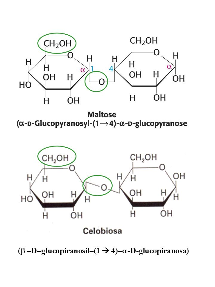 http://www.um.es/molecula/gragluci/celobios.gif http://2.bp.blogspot.com/_ CfHqEFJd0uA/TQ0VeND l44I/AAAAAAAAAC8/5 6UO1i83hKk/s1600/malt osa.jpg ( –D–g