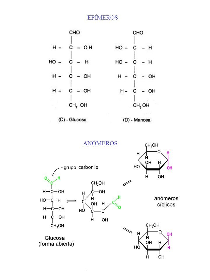 http://mazinger.sisib.uchile.cl/repositorio/lb/ciencias_quimicas_y_far maceuticas/cide01/images/cho.jpg EPÍMEROS http://www.ciencia.cl/Cie nciaAlDia/v