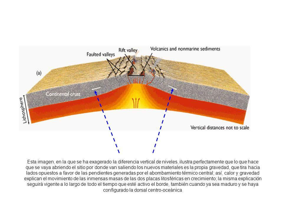 http://www.earth.northwestern.edu/people/seth/202/lectures/Platetect/Continentalevl/tririfting.htm Esta imagen, en la que se ha exagerado la diferenci