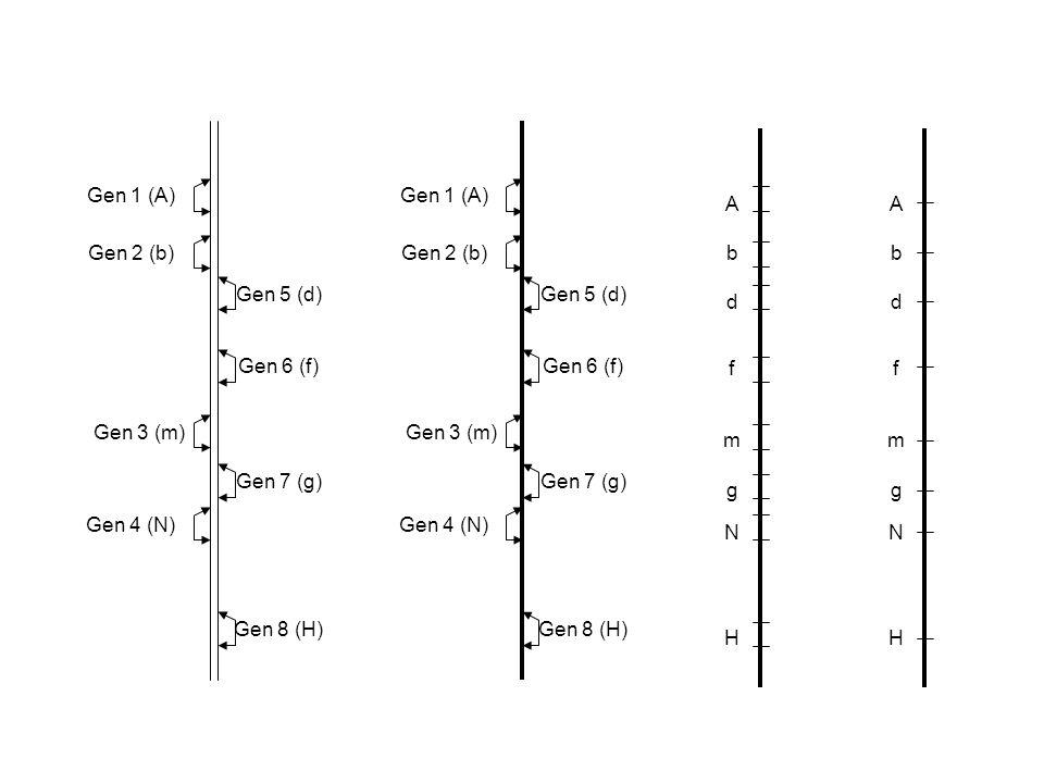 Gen 1 (A) Gen 2 (b) Gen 3 (m) Gen 4 (N) Gen 5 (d) Gen 6 (f) Gen 7 (g) Gen 8 (H) Gen 1 (A) Gen 2 (b) Gen 3 (m) Gen 4 (N) Gen 5 (d) Gen 6 (f) Gen 7 (g)